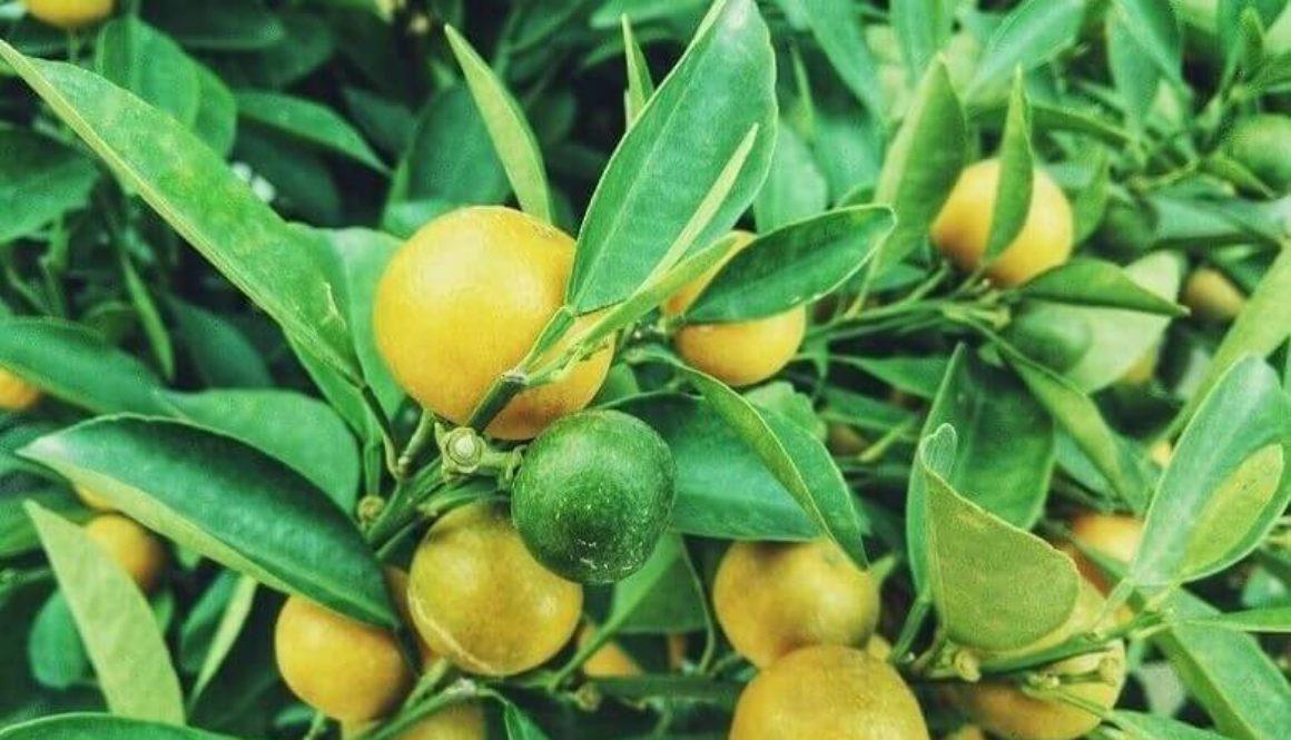 Warmes Wasser mit Zitrone: Warum dein Körper es dir danken wird