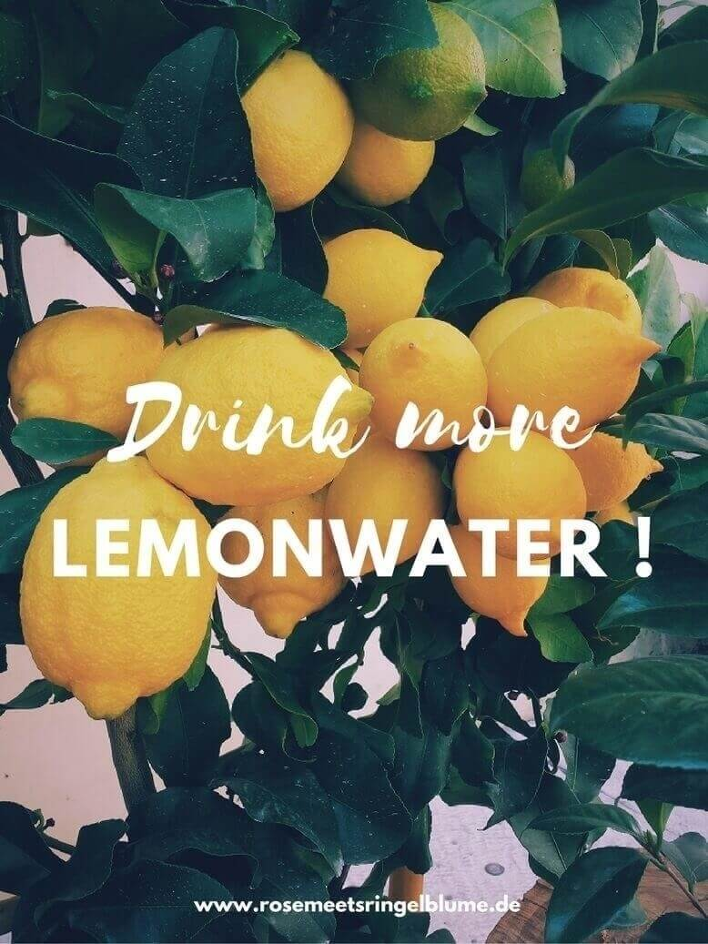 Zitronenbaum für warmes Zitronenwasser am Morgen