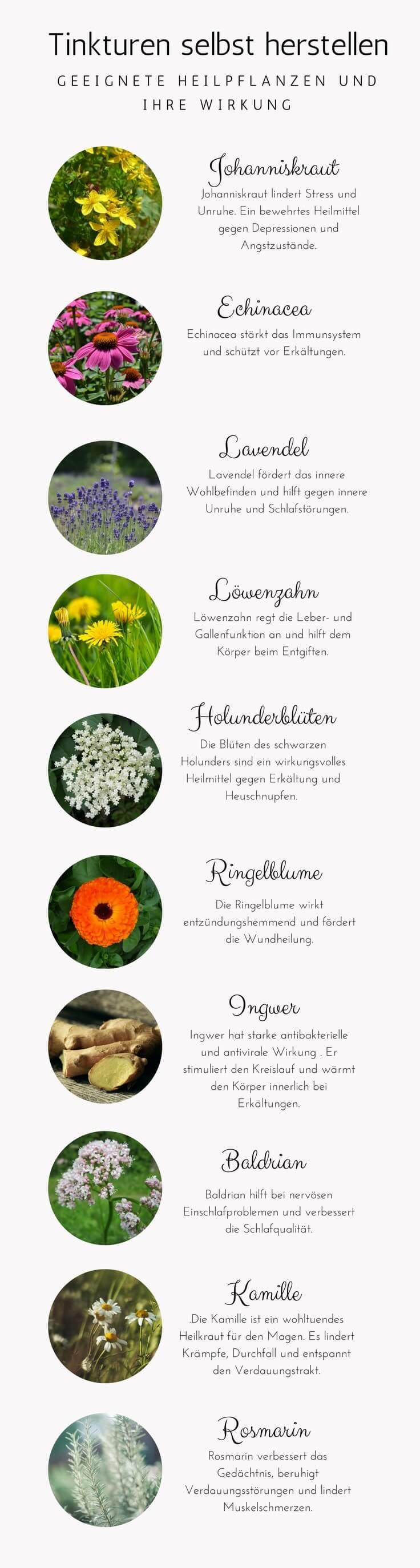 10 geeignete Heilpflanzen für Tinkturen