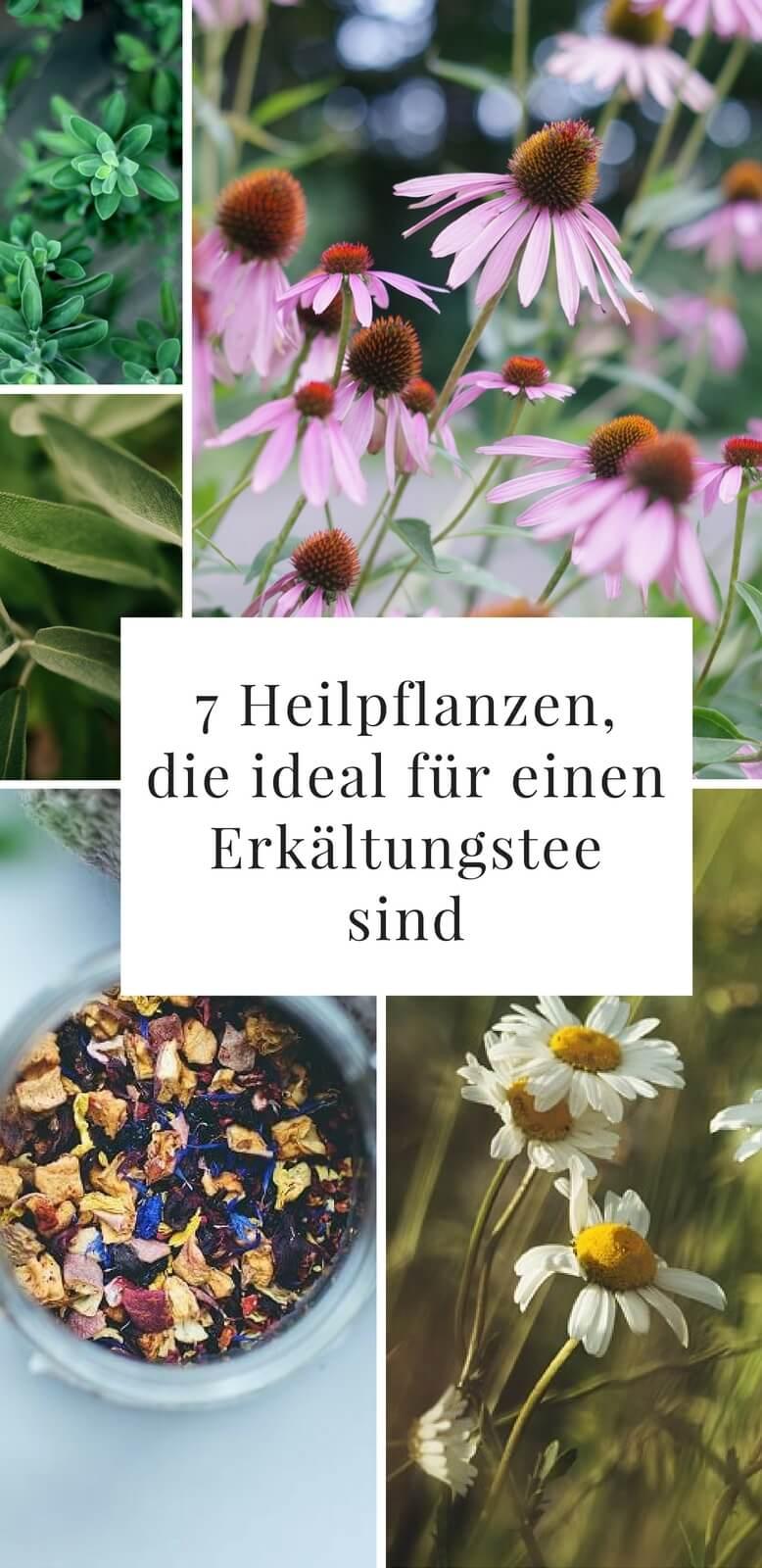 7 Heilpflanzen, die ideal für einen Erkältungstee sind