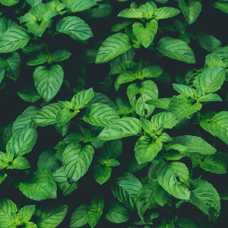 erk ltungstee 7 starke heilpflanzen gegen husten und schnupfen. Black Bedroom Furniture Sets. Home Design Ideas